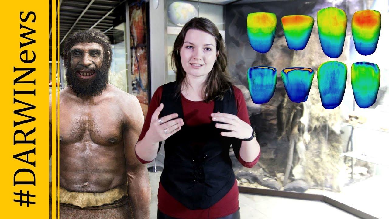 Неандертальцы гораздо древнее, чем думали ученые. Елена Сударикова. #DARWINews