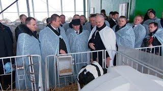 Смотреть Лукашенко в Дзержинском районе посетил самый современный молочно-товарный комплекс онлайн