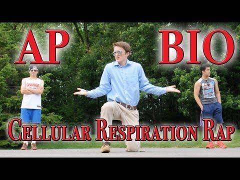 Cellular Respiration Rap