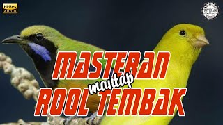 Download Lagu Masteran Mantap Roll Tembak | Burung Kenari - Cucak Cungkok Gacor Ampuh mp3