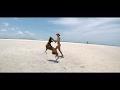 German Boxer Dog is enjoying the Florida Beaches