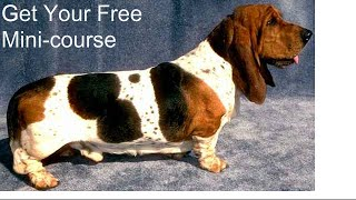 **ASAP**  Potty Train Puppy Basset Hound - Free Mini-course