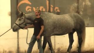 CAVALIA HORSES arrive in Australia & Horse Talk TV is there to meet them