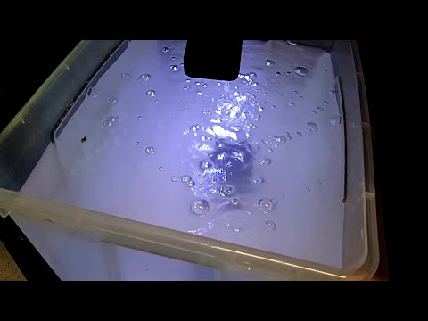 How To Make A Ramshorn Snail Aquarium 🐌 Marks Shrimp Tanks