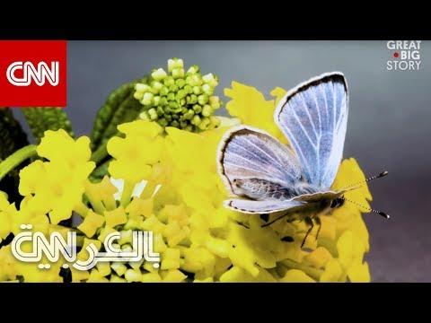 فراشة نادرة اختفت لسنوات تعود للظهور  - نشر قبل 2 ساعة