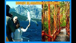 Bosque de Arrayanes-Neuquen-Patagonia-Argentina-Producciones Vicari.(Juan Franco Lazzarini)