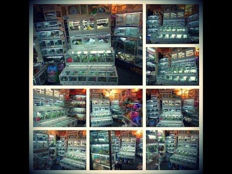 Chuồng nuôi Tho . www.hamstermiendathua.vn