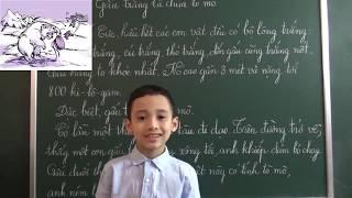 Tiếng Việt lớp 2 [Tập đọc] - Gấu trắng là chúa tò mò