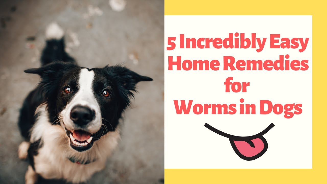 25 Incredibly Easy Home Remedies for Worms in Dogs - eHome