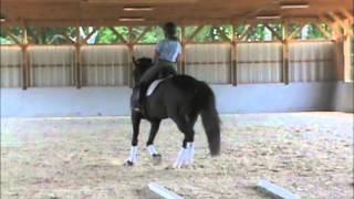 Cloverlea Dressage Sale Horse--Astro