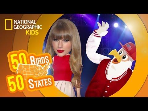 50 Birds, 50 States 🐦 | Nat Geo Kids