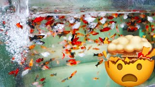 Fish Room Tours #4 Tropical Fish Wholesaler Warehouse Rooms Filled with Fish Tanks. thumbnail