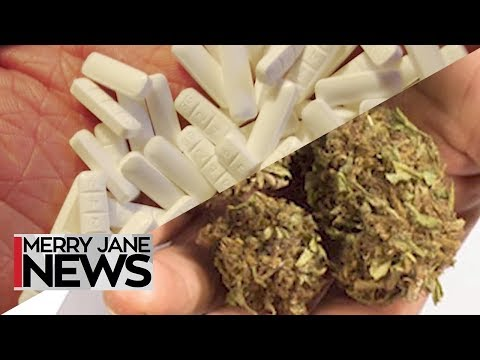Pot Over Pills: The Effects of Cannabis vs. Prescription Dru