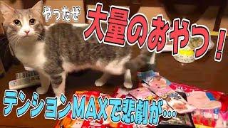 大量のおやつにテンションが上がった猫が全力疾走で机に激突!?めっちゃ痛そう…