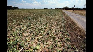 grand-solar-minimum-billion-crop-losses-grow-zones-shifting