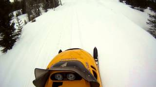 MT Snowmobile trail riding with grouse pedestrian Thumbnail
