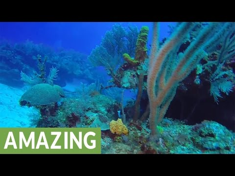 Thumbnail: Diver finds hidden treasures on Grand Cayman Island