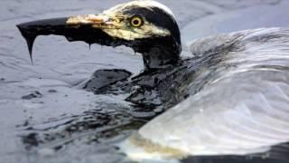 видео Нефтяные загрязнения мирового океана