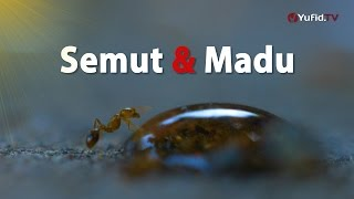 Semut dan Madu | Yufid.TV - Pengajian & Ceramah Islam
