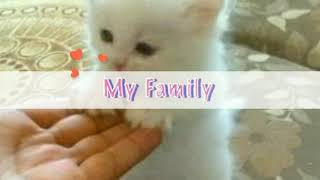 8 MOST CUTEST KITTY'S IN WORLD