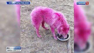 Выкрашенных в розовый цвет собак перевезут в Москву