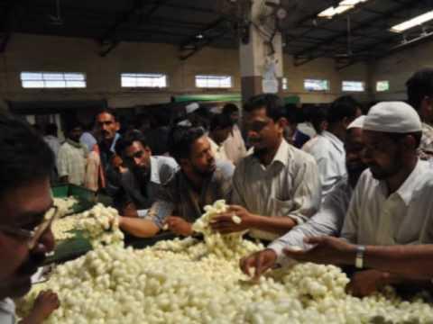 Silk Cocoon Market