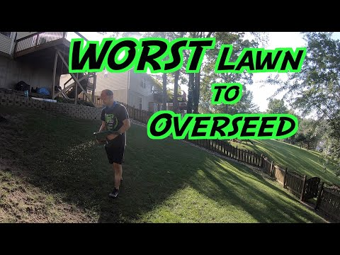 The WORST Lawn to OVERSEED | Seeding a Steep Hill | Rocky Soil, Erosion, Tree Roots |
