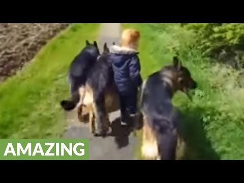 3-year-old dog whisperer will blow your mind!