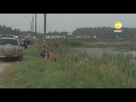 В Твери прямо у трассы отлично клюёт карась. 2016-07-27