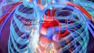 Examen físico (physical examination) Telemedicina Contacto: agustindalverme@yahoo.com - emilianolpz@.