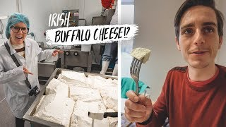 Learning To Make IRISH BUFFALO CHEESE!? + Wrecked Our Rental Car!