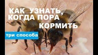 Признаки того, что пора кормить пчёл зимой. Спасайте пчёл!!!