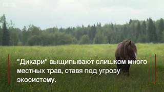 Жизнь лошадей в дикой природе