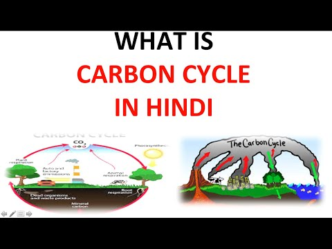 3 2 carbon cycle