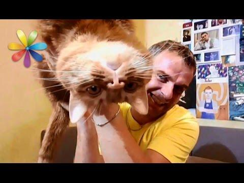 Тест-драйв методов: как обезопасить новогоднюю ёлку от кота – Все буде добре. Выпуск 931 от 14.12.16