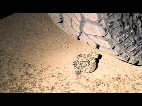 Young Rattlesnake Surprises Fish And Wildlife Officer