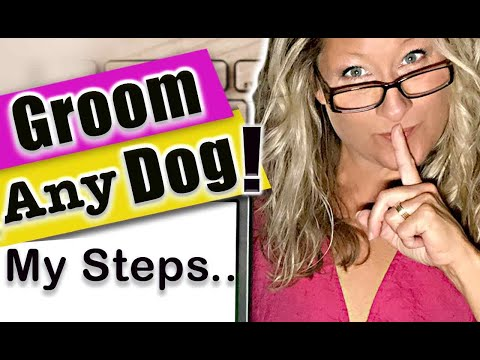 My SECRET Steps To GROOM ANY DOG!