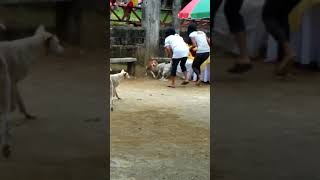 FUNNY DOG FIGHT😆