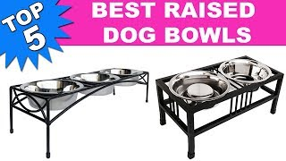 Top 5 Best Raised Dog Bowls 2019