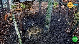 🔊 Karmnik dla wiewiórek 🐿️ w karmisku w lesie na Podkarpaciu