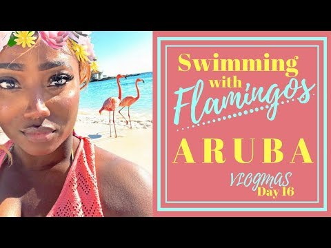 A R U B A | Swimming with Flamingos | Flight Attendant Vacation | VLOGMAS DAY 16