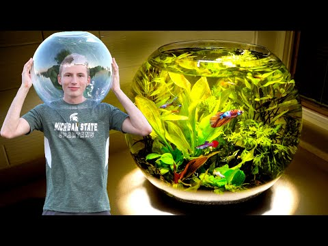Massive 10 GALLON Planted Fish Bowl