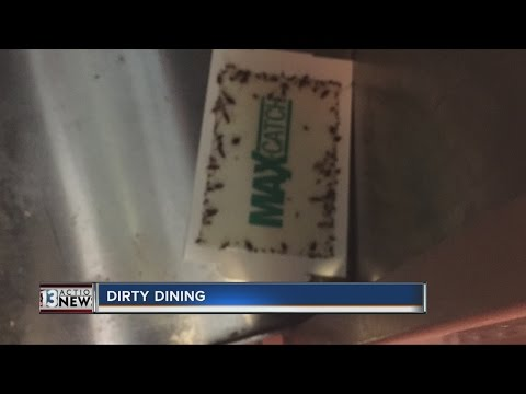 DIRTY DINING: Roaches at Honey Pig and Boulevard Mall