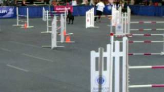 Giant Schnauzer Ike Running Agility At Akc Invitational 2008 Round 4