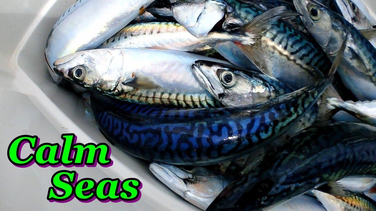 Calm Seas Fishing - Mackerel Pollack Conger Lobster & Crab