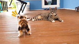 사랑을 독차지하던 고양이에게 막강한 경쟁자가 나타났다  A strong competitor appeared to the cat who had monopolized love