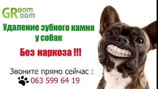 Ультразвуковая чистка зубов собаке без наркоза. Безболезненное снятие зубного камня собак GroomRoom