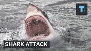 How to lower your chances of a being attacked by a shark