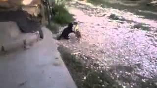 Утенок и котенок))