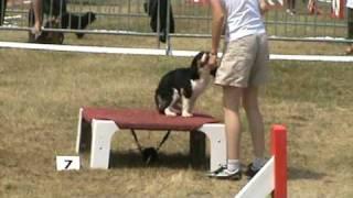 BALDWIN Cavalier King Charles Spaniel manche 1 agility cat A